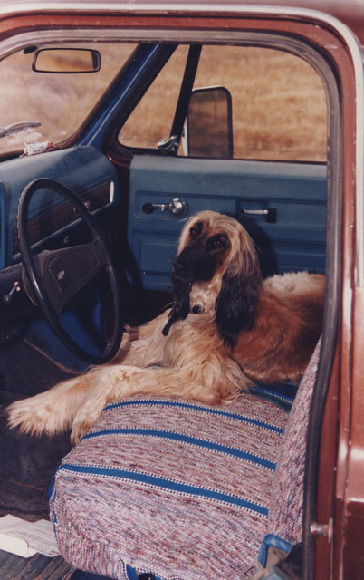Sasha-in-Pickup-Seat-64x.jpg